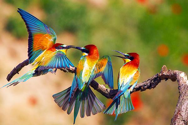 гороскоп весенних пташек