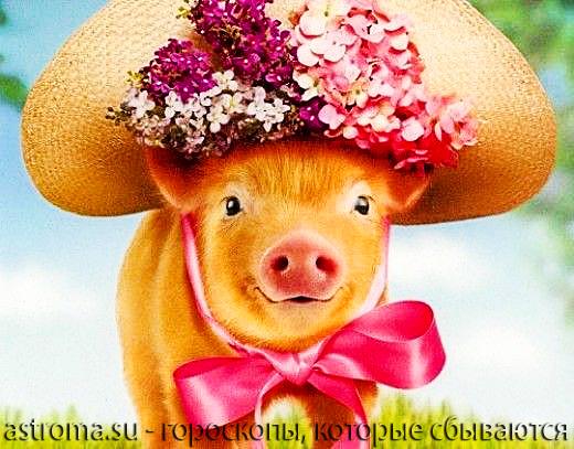 общие характеристики года свиньи