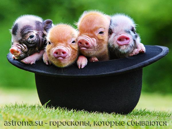 гороскоп новорожденных